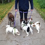 Multi Dog lead IMG_0722_FB